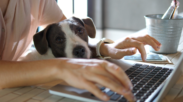 Dog on keyboard