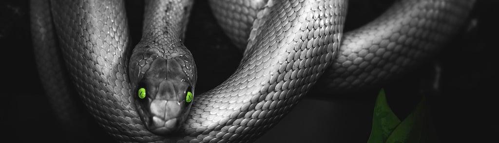 Snake ransomware2